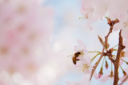 pollination-by-bee.jpg