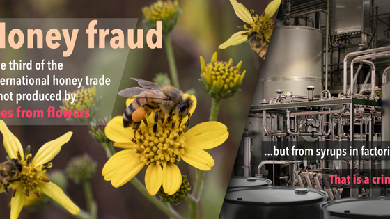 Are you Buying Real Honey?