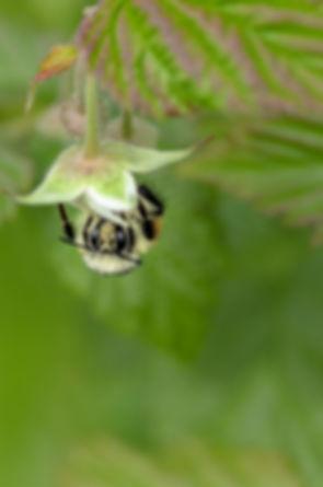 unsplash-bees-004.jpg