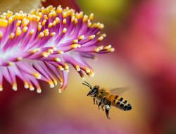 unsplash-bees-006.jpg