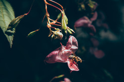splitshire-bees-001.jpg