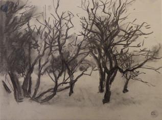 Blackthorns in winter, Bourn Brook, Toft