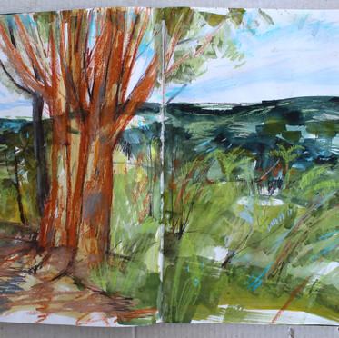 Eucalyptus trees Selva Negra.Nicaragua