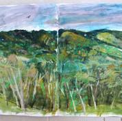coffee farm Selva Negra. Nicaragua