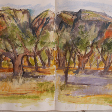 Olive Groves Sisi, Crete