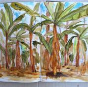 banana palms aroyo.