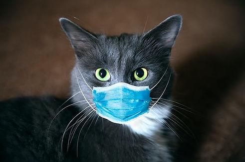 Covid cat.jpg