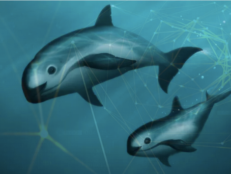 Could AI help save the Vaquita?