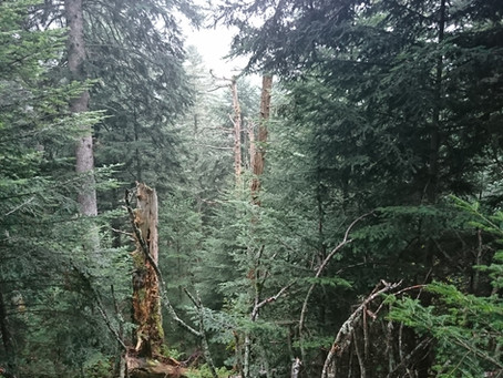 OLD GROWTH FORESTS. Shelters of biodiversity