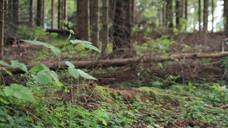 Forest_Slice.mov