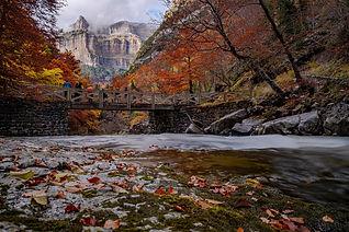 autumn-4941893_1920.jpg