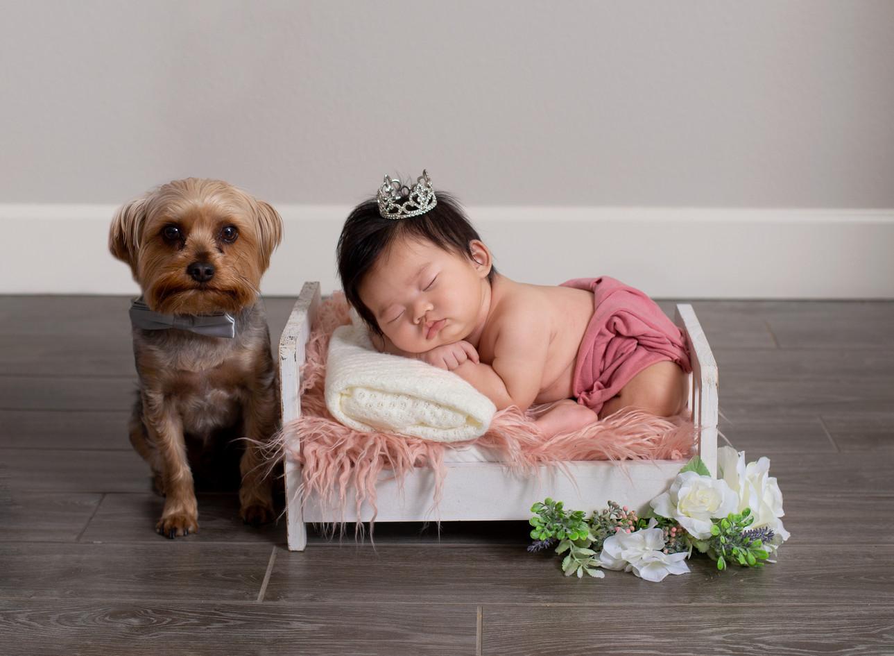 princess with beaty the yorkie