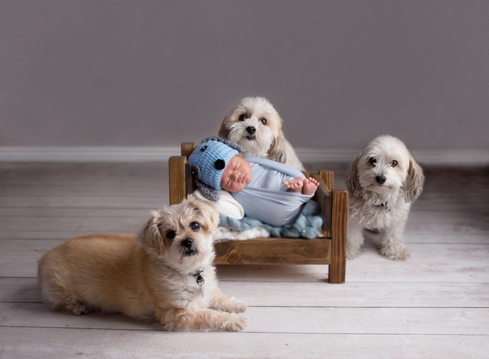 Newborn boy and his dogs