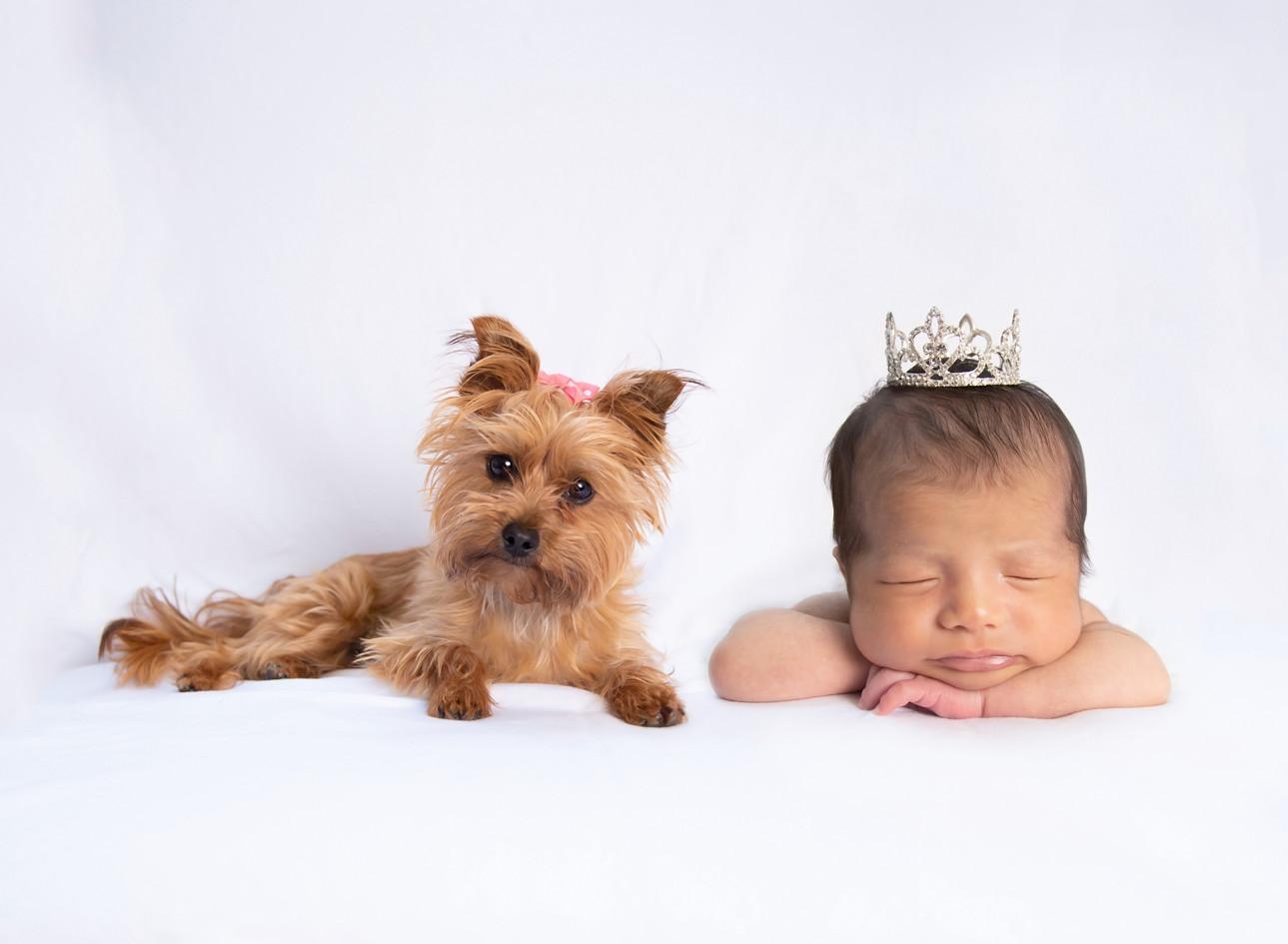 princess and yorkie