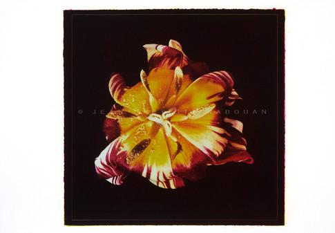 Jardin secret #4  Gomme bichromatée trichrome 40x40cm