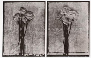 Les fleurs fanées #1. Gomme bichromatée