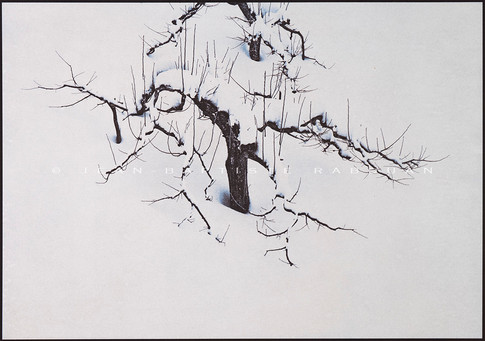 Tohoku #4 Gomme trichrome sur papier aquarelle 40x50cm