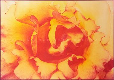 Jardin secret #7  Gomme bichromatée trichrome 40x50cm