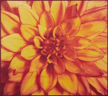 Jardin secret #6  Gomme bichromatée trichrome 40x40cm