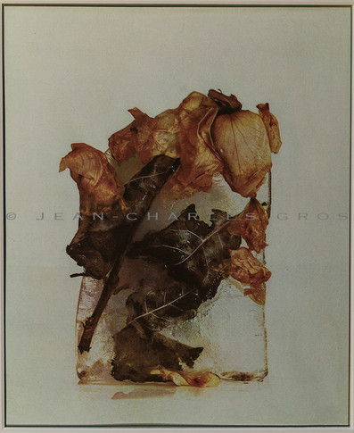 Les roses fanées. Gomme bichromatée polychrome.