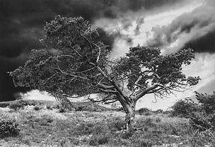 ardèche, arbre, tirage charbon