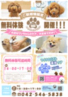無料体験 ポスター2.28.jpg