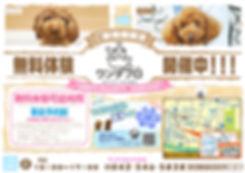 無料体験ポスター 横.jpg