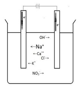 電解質2.jpg