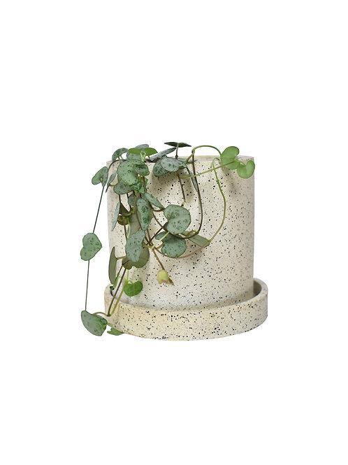 Small plant pot and dish in granite