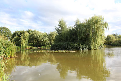 The island attracts carp in numbers