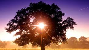 The Power of Light!