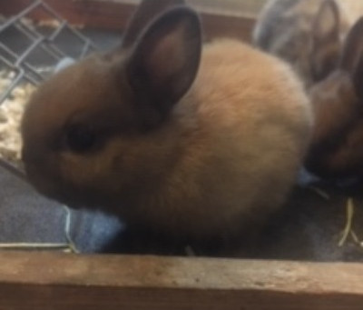 of Rabbits and Robins