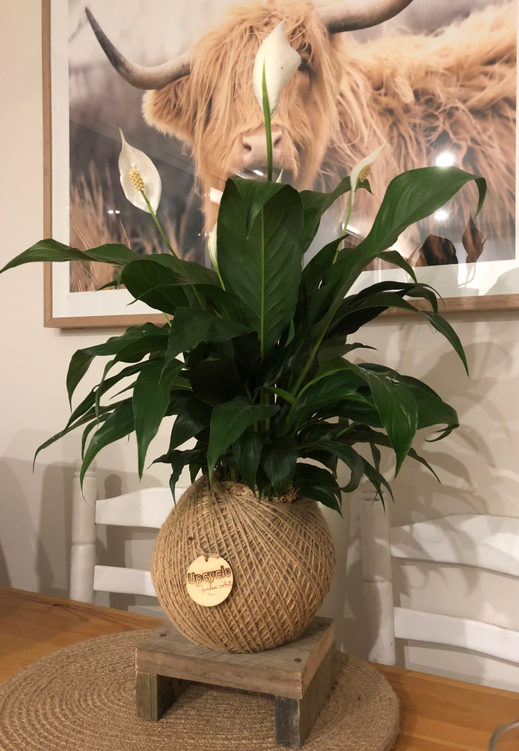 Kokedama Table Stand