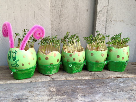 """School Holiday Kids Craft Project  """"Grow your own caterpillar with egg shells"""""""