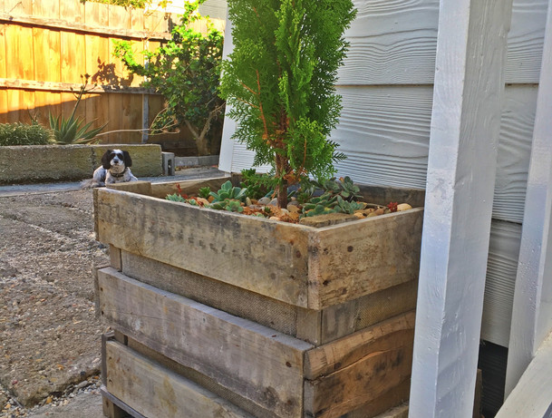 mums planter box.JPG