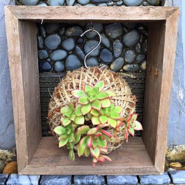 The Single Kokedama Hanging Box
