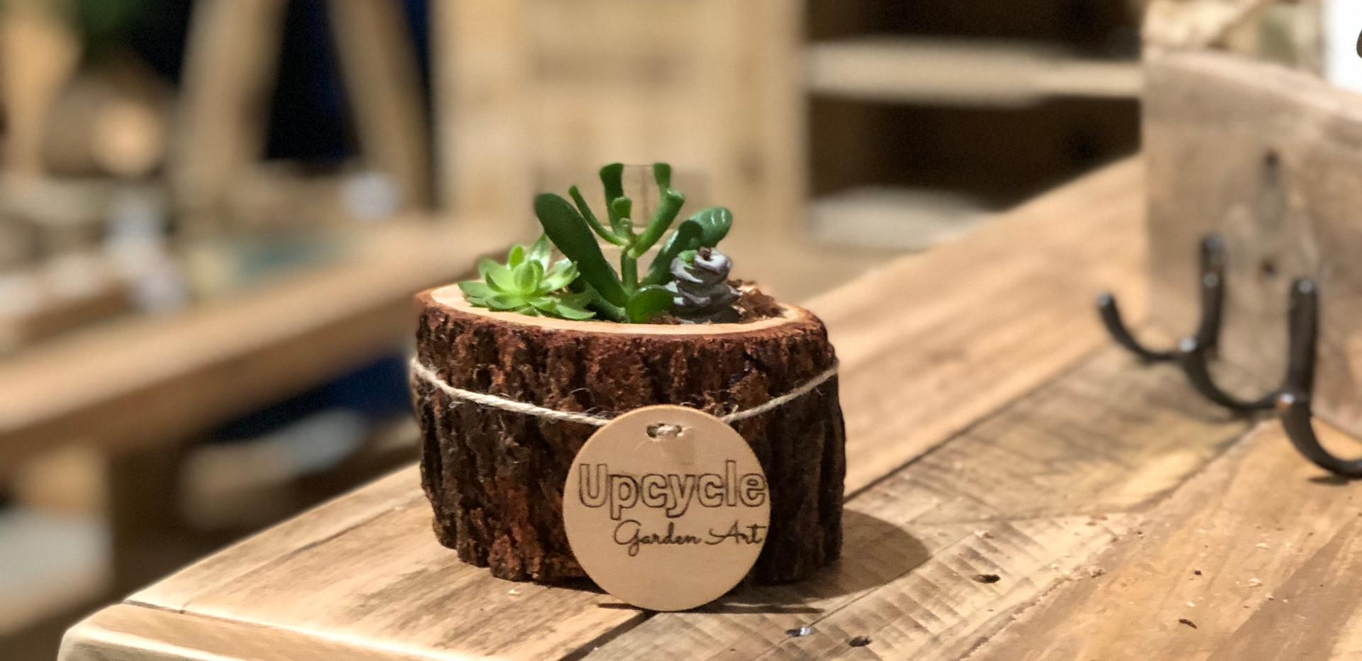 Mini Succulent Logs