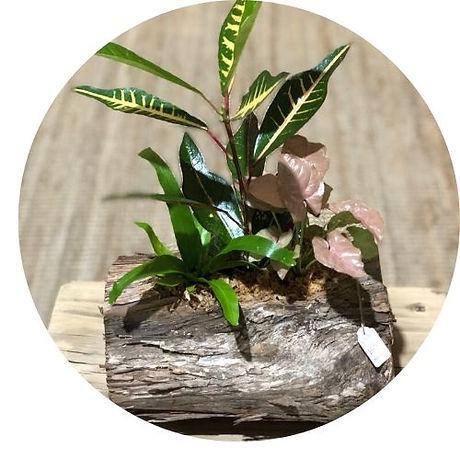 plant log circle crop.jpg