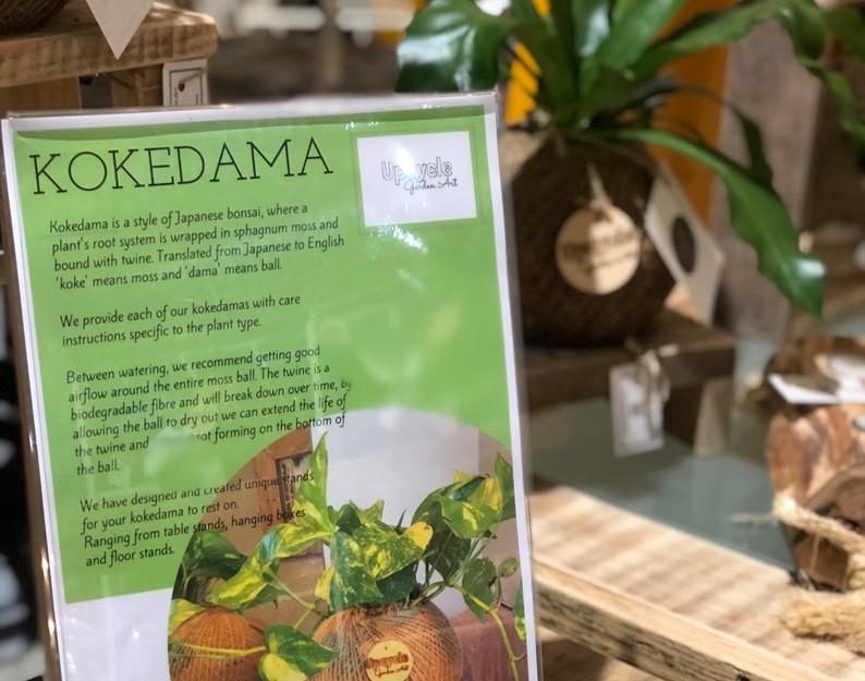 Kokedama Care