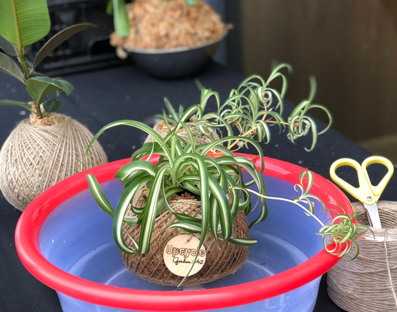How to water your kokedama demonstrations onsite at Market Fair by Elle from Upcycle Garden Art