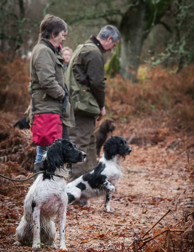 Group Gundog Classes