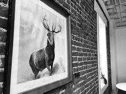 Need advice_ Ask Mr. Deer