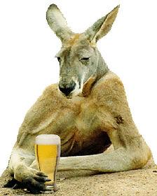 Funny-Kangaroo-Pictures-2.jpg