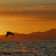 Sunset Manta jump.jpg