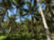 mindanao_land01.jpg