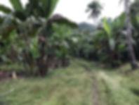 abaca02.jpg
