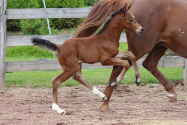 Horses of Foxworth Farm