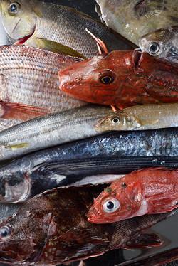 150324_TokyoCalender_Abysse_Fish