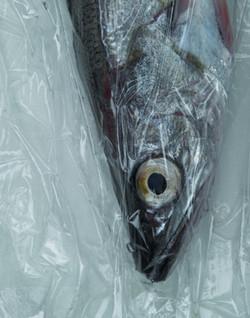 Fish-007