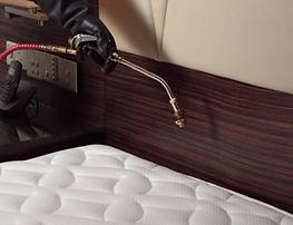 bed bugs1.jpg